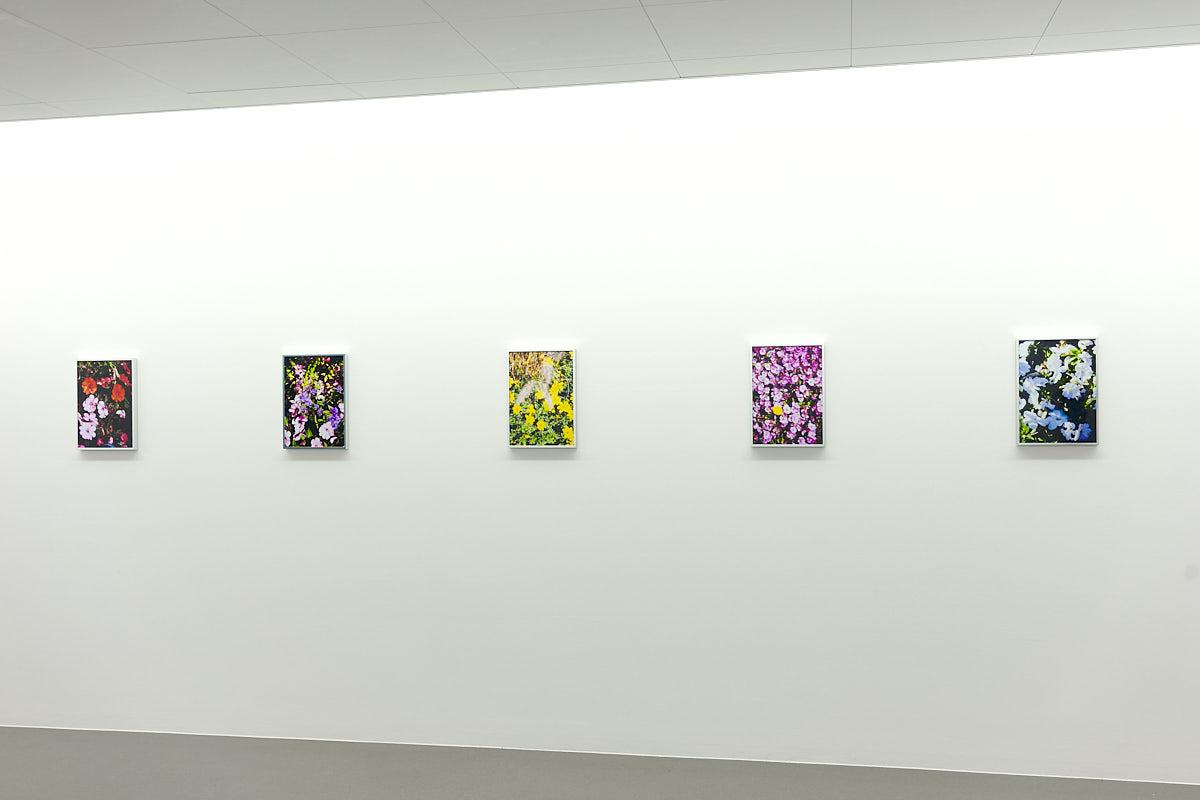 Ausstellungsansicht: Fleurs (Flowers), Museum Haus für Kunst Uri, Altdorf