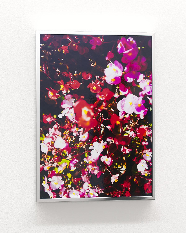 Detail: Fleurs (Flowers), Museum Haus für Kunst Uri, Altdorf