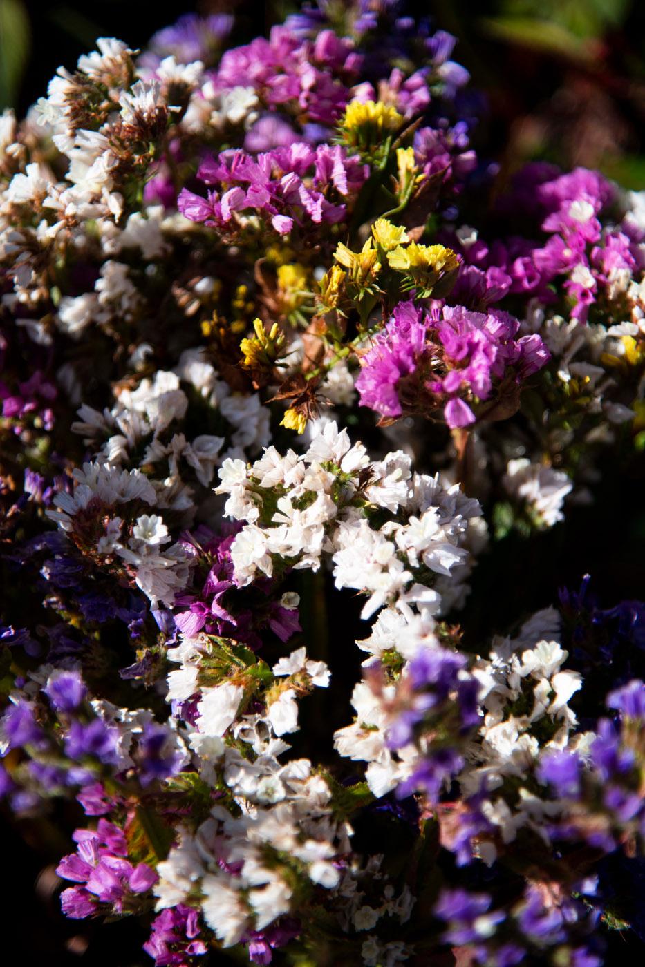 Fleurs (Flowers) 26