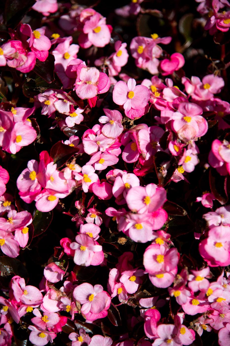 Fleurs (Flowers) 38
