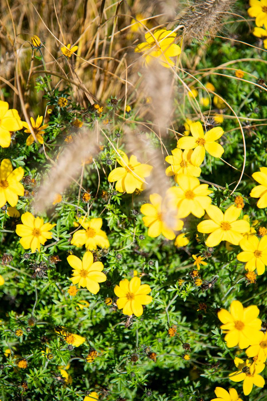 Fleurs (Flowers) 42